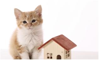 新築住宅建設・販売事業